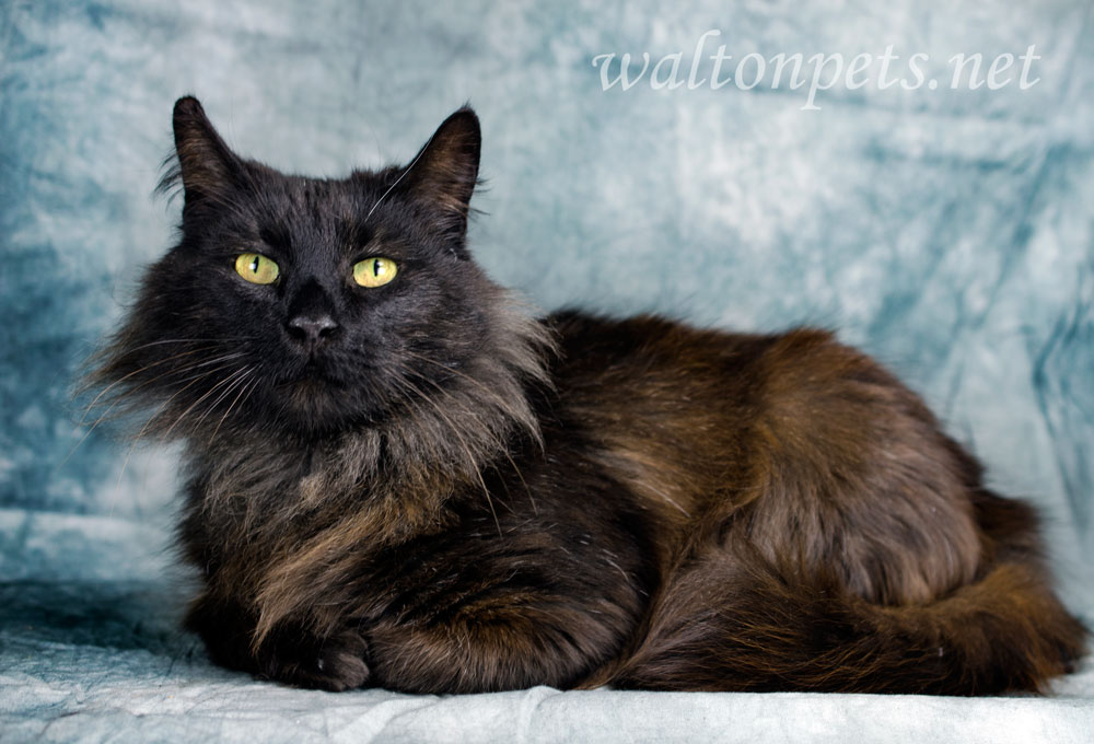 Waltonpets Furtography Session Is An Animal Shelter Pet
